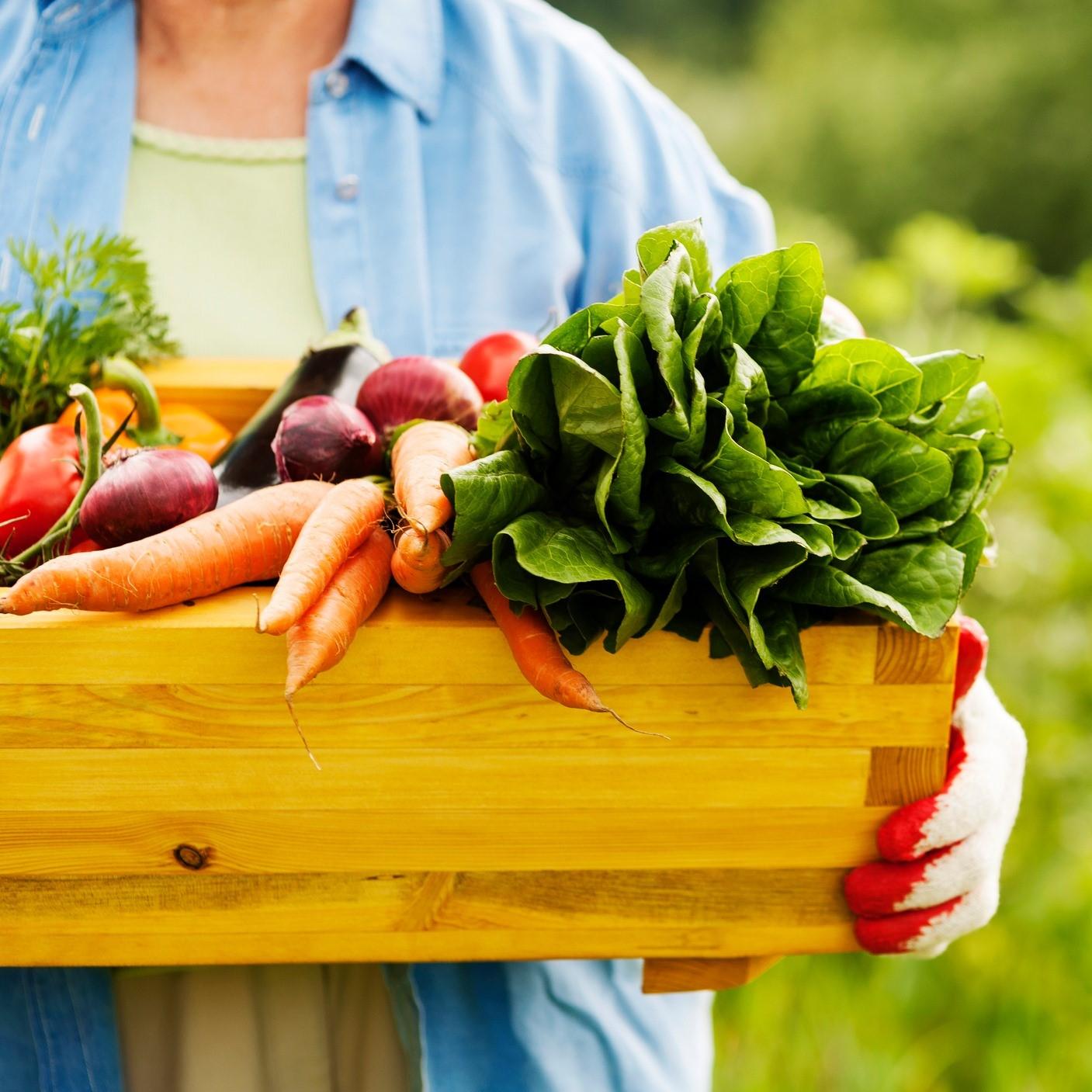 Gerber® Organic Food